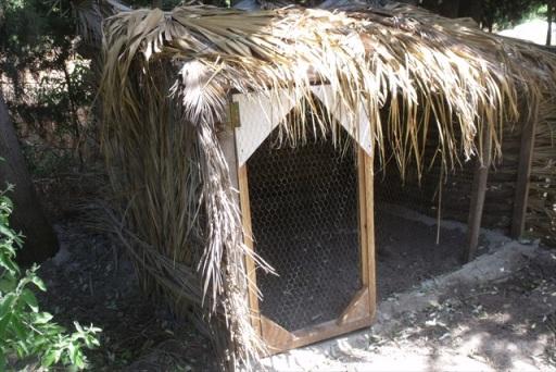palmiye dallarindan kümes : www.KendinYapSitesi.com
